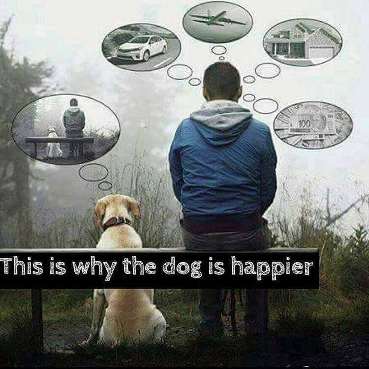 meme dog happier