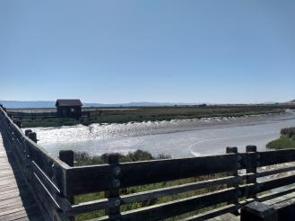 landscape wetland and walkway pier